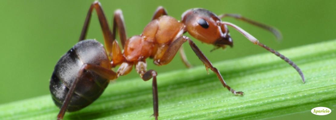 control de hormigas