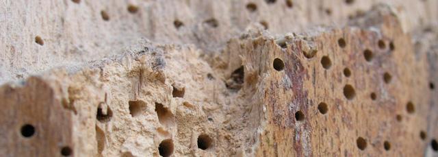 plaga en la madera
