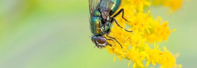 Control de Plagas en Primavera