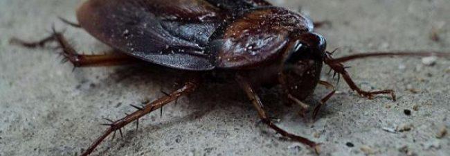 Claves para prevenir y eliminar la aparición de cucarachas en casa