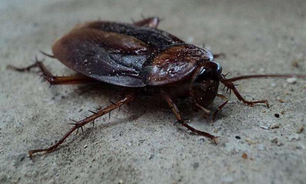 Cucarachas Valencia