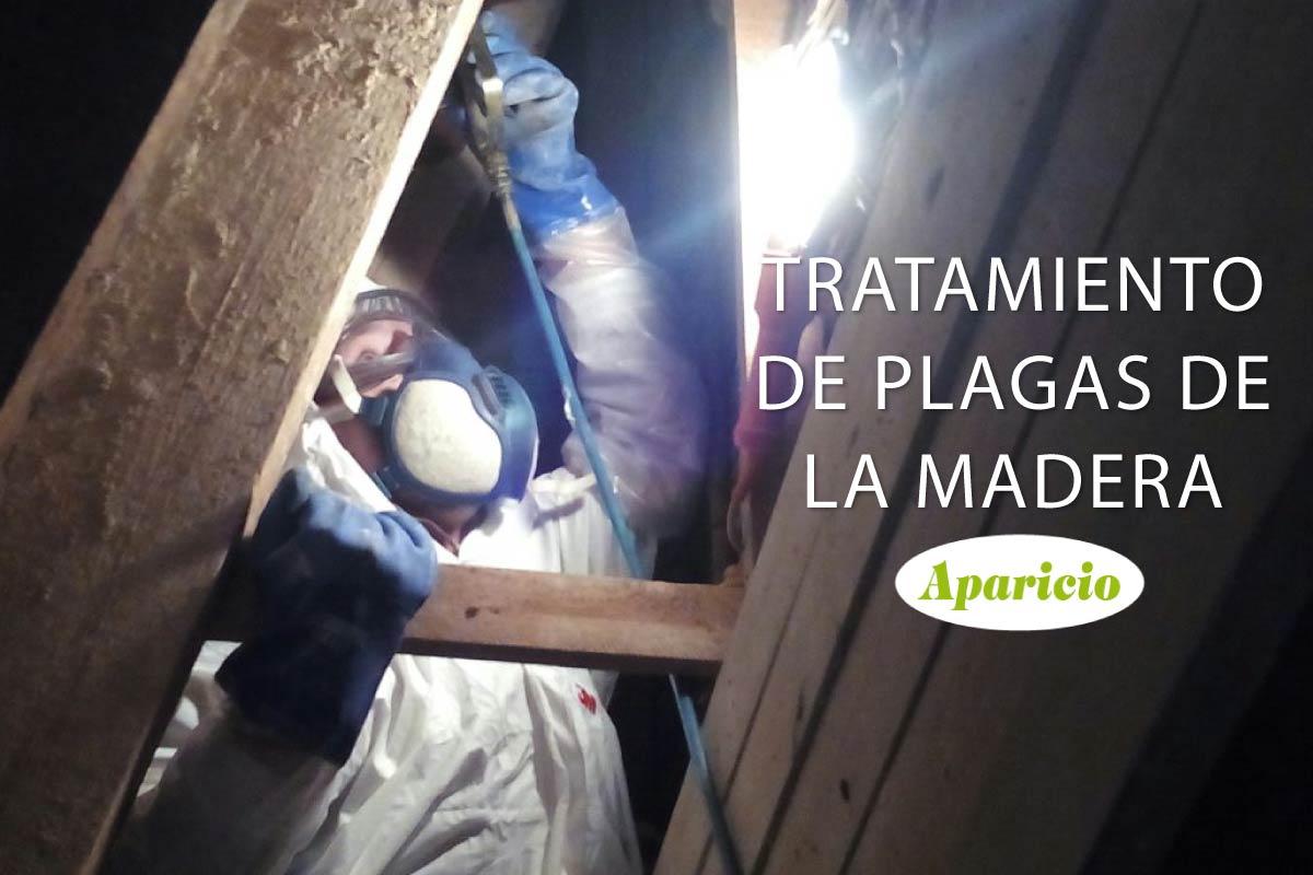 Tratamiento de plagas de la madera www - Tratamiento de la madera ...