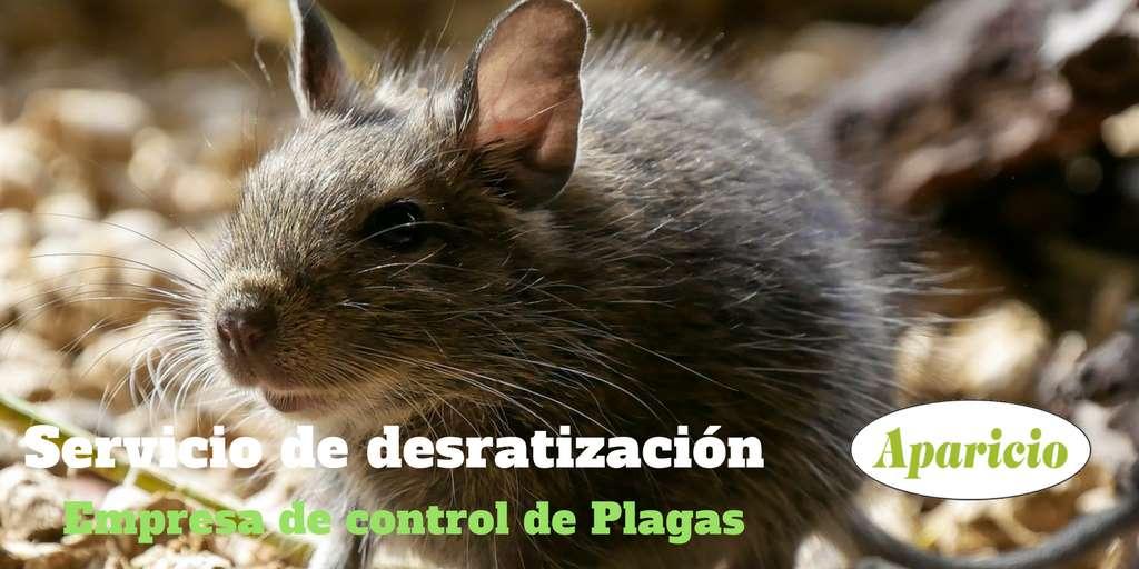 Desratización Valencia