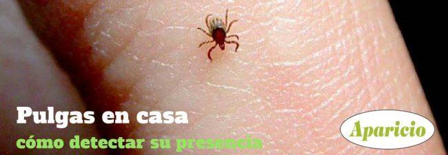 Cómo saber si tienes pulgas en casa