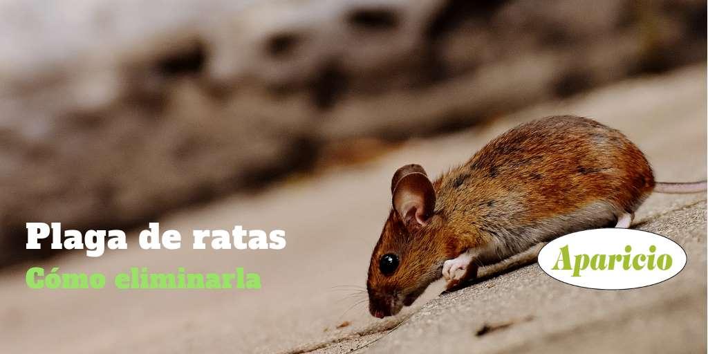 Plaga De Ratas ¿cómo Eliminarlas?