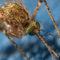 mosquito prevencion