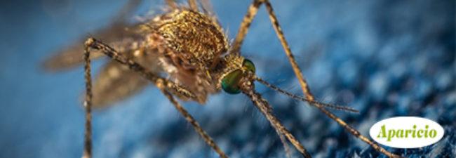Mosquitos: algunos consejos sobre cómo proteger tu negocio