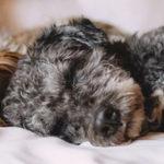 Mi Perro Tiene Pulgas O Hay Pulgas En Casa, ¿qué Hago?