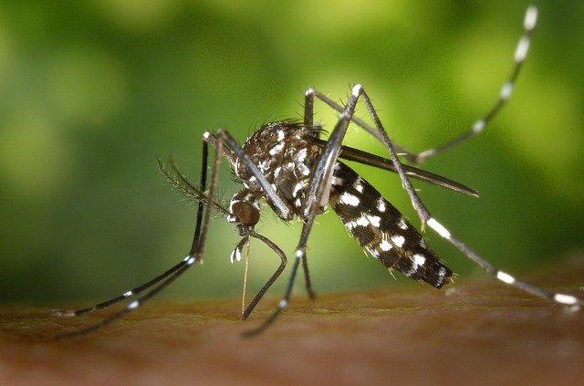 Mosquitos Y Covid